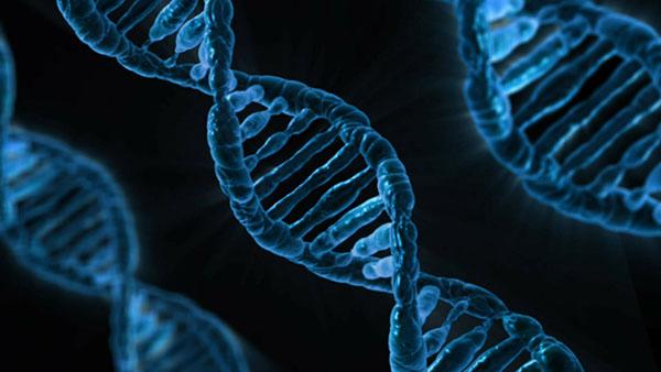 obesidad y genética